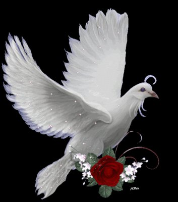 Dovewithrose